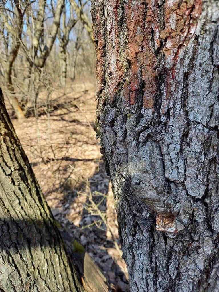 kicsit kilóg a lyukasztó a fából