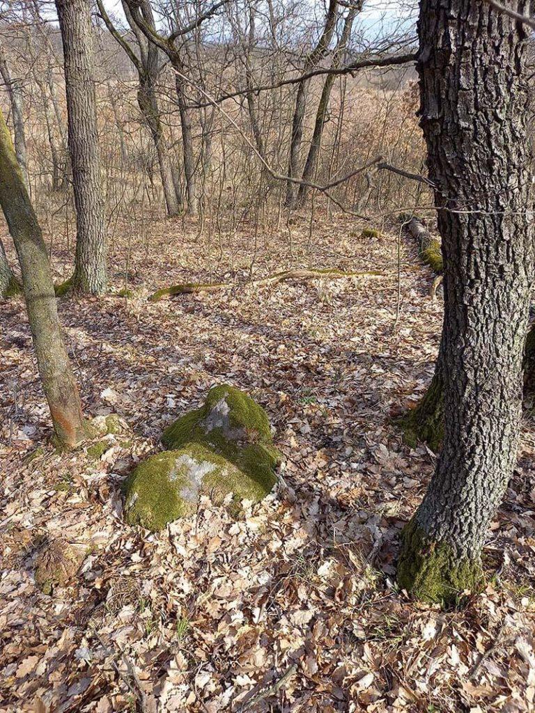 szikla a fák között