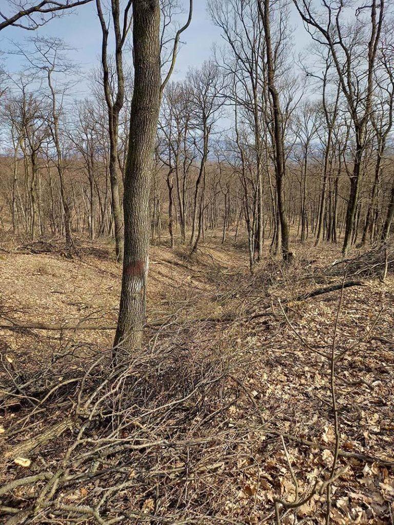 levágott területen éppen a jelzett fát hagyták meg