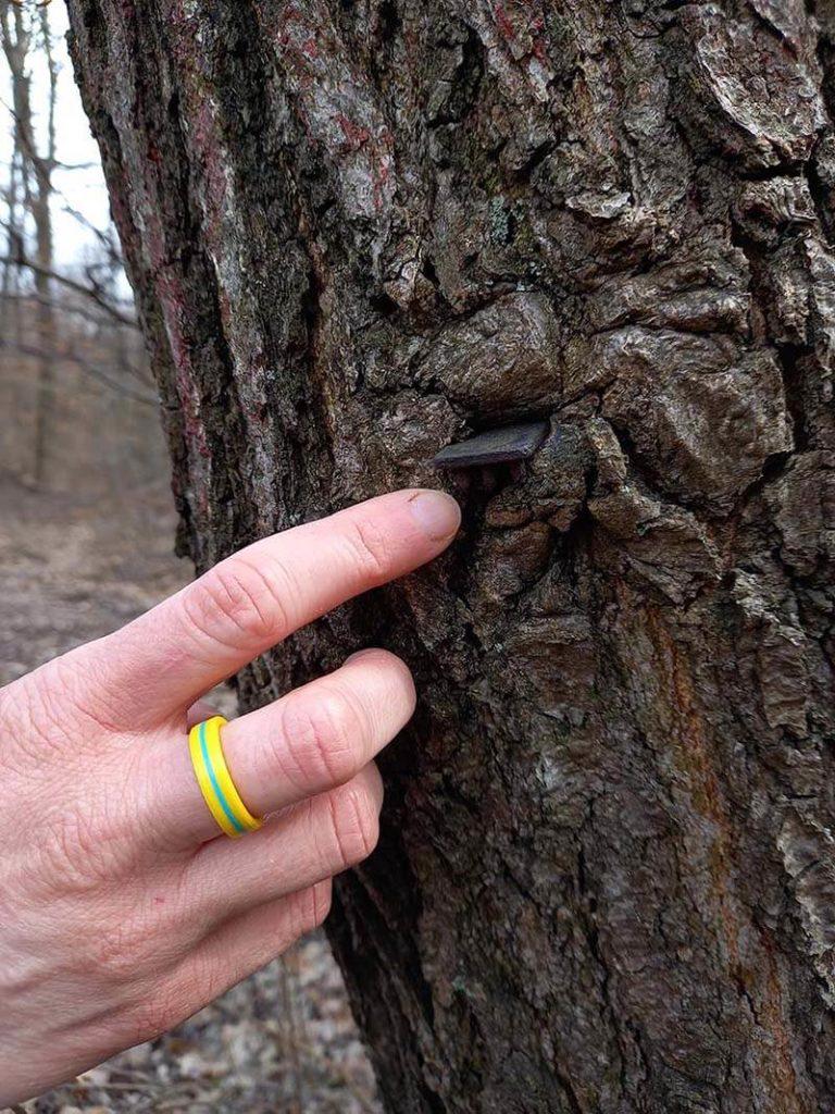 lyukasztó, amit a fa még nem evett meg teljesen