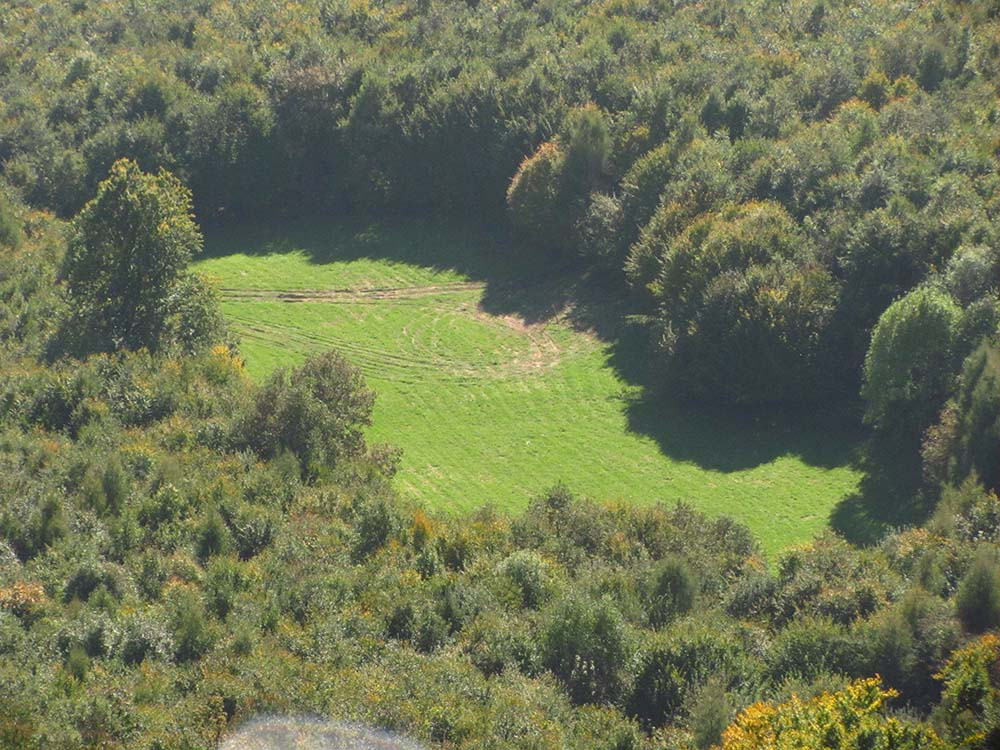 kisebb rét erdőben