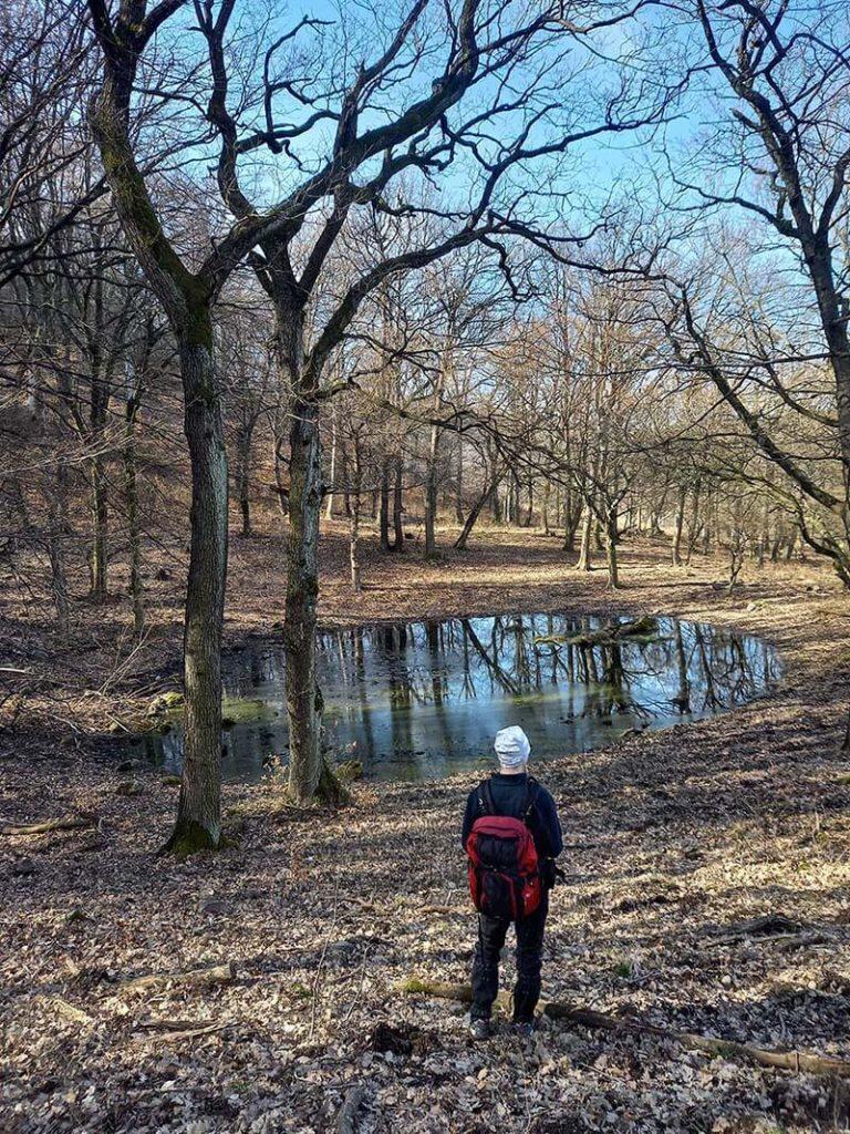 kis tó az erdőben