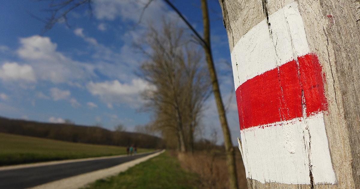 piros turistajelzés fára festve